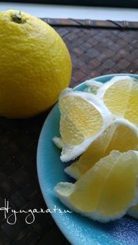 フルーツ大好き⭐宮崎「日向夏」 - 料理研究家ブログ行長万里  日本全国 美味しい話