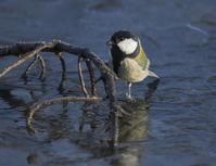 池凍る - 鳥撮りに行こう!(ついでにあれもこれも)