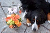 元気カラーのお花を貰ったよ♪ - Reon&Roses+Lara