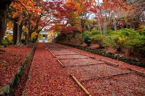 京都の紅葉2016 毘沙門堂・秋景 - 花景色-K.W.C. PhotoBlog