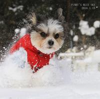 snow DOG* 【序章】 (動物・ペット部門) - FUNKY'S BLUE SKY