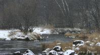 江雪降りしきる中にキバシリと - 雅郎の花鳥風月