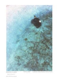 Portfolio 042 - Shou's portfolio
