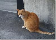 ◆初詣の帰り道・・・人懐っこい茶トラ猫さんとの出逢い(*^m^*) - ☆彡ちいさな幸せ☆彡別館