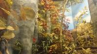 ふるさとの宝物 第170回 秋-ブナ林の動物たち - 青森県立郷土館ニュース