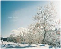 雪と柿の木と.. - Forest Garden