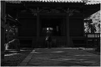 ちょこっと川越 喜多院あたり #005 - ルリビタキの気まぐれPATA*PATA