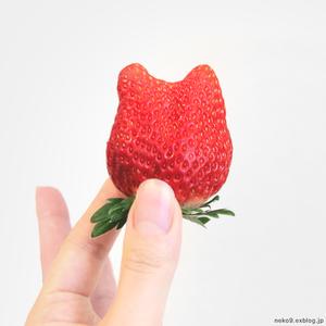 猫イチゴ - 賃貸ネコ暮らし|賃貸住宅でネコを室内飼いする工夫