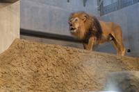 ライオン - 小さなお庭のある家