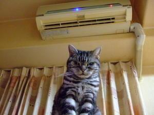 シニア猫を労わる冬 - U-LALA