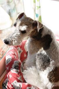 誘う愛犬 - ビーズ・フェルト刺繍作家PieniSieniのブログ