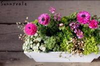 アネモネの寄せ植え - さにべるスタッフblog     -Sunny Day's Garden-
