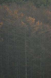 秋と冬のあいだの季節 - 空ヤ畑ノコトバカリ