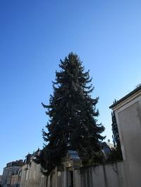 コロラドトウヒ épicéa bleu - フランス Bons vivants idees d'aujourd'hui