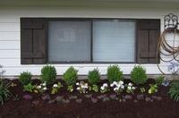 家で冬越しする植物と春を告げる球根類 - コテージ便り