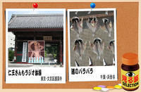 「見る薬」セレクション−1 - デジカメ散歩写真