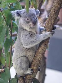 1月20日(金) 自己採点 - ほのぼの動物写真日記