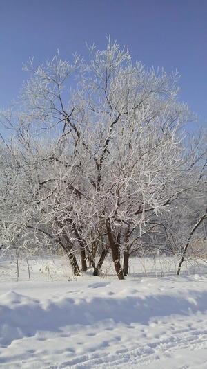 大寒の朝の十勝野・・・霧氷・樹氷 - 木遊人masamiの十勝lifelog
