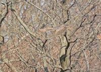 雑木林のオオタカ幼鳥 Northern Goshawk - 素人写人 雑草フォト爺のブログ