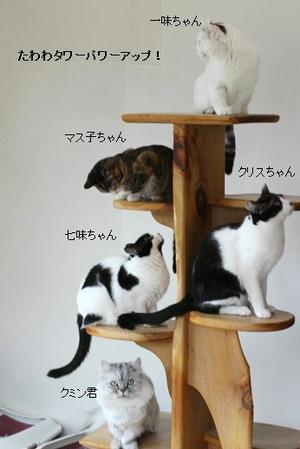 たわわタワー続きと今日の保護猫さん達 - 保護猫さんのご縁探し