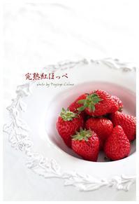 完熟紅ほっぺ - フランス菓子教室 Paysage Calme