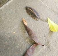 葉っぱ虫 - 鉛筆も ダイヤモンドも 同じ炭