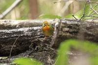 プチ遠征で出会った野鳥たち・1♪(写真部門) - happy-cafe*vol.2