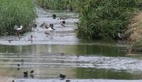 沖縄本島探鳥会ー4日目の3 - 写真で綴る野鳥ごよみ