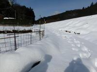 雪の中でトンボを探す - 加茂のトンボ (トンボ狂会)