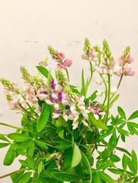 切花のご紹介 - ~ Flower Shop D.STYLE ~ (新所沢パルコ・Let's館1F)