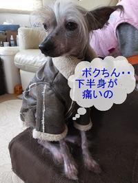 老化の始まり (+ビワの葉温灸) - 毎日笑顔♪ 裸犬☆温・真珠・絆愛Ⅱ
