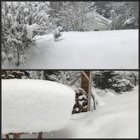 雪景色とオクナ・セルラータ - 森の扉