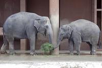 雪の日の大型動物たち - 動物園放浪記