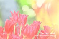 春をはこぶ花 - 色音あそび