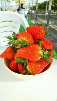 ちょっと素敵なイチゴ狩り『くりみ苺園』さん  ♪静岡美味しいものドライブ④♪ - Emily  diary