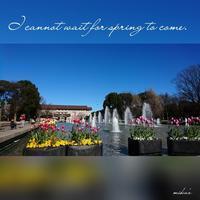 「チューリップと噴水」上野公園散歩④2017.1.21 - わたしの写真箱 ..:*:・'°☆