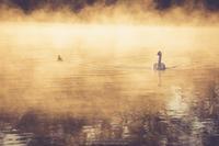 Fog (写真部門) - HI KA RI