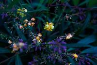 花の写真 - フォトサークル      「森羅の会」