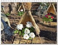 鶴岡八幡宮で咲き誇る正月牡丹を鑑賞@神苑ぼたん庭園 - 続☆今日が一番・・・♪
