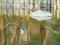 鳥撮りは難しい …orz - Photo of the Weekend
