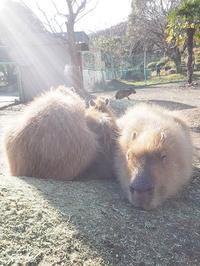 1月22日(日) healing - ほのぼの動物写真日記