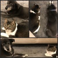猫sとハナちゃん - 森の扉