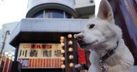 ホルモン劇場 - 小太郎の白っぽい世界