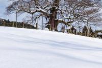 雪の醍醐桜 - 写真ブログ「四季の詩」