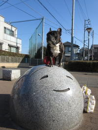 ワンコと散歩 - ichibey日々の記録