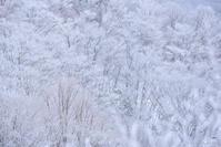 雪雲を追いかけて:3:凍てつく林へ - walk with my Camera