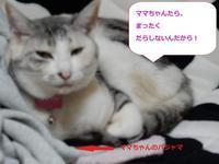 ダラダラ曜日 - 愛犬家の猫日記