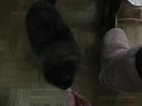 【キクちゃん】距離を縮める - ねこ結び2