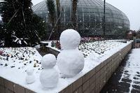 『エアプランツ展』開催中! - 手柄山温室植物園ブログ 『山の上から花だより』