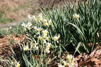 嵯峨山麓の花 - 犬の一歩